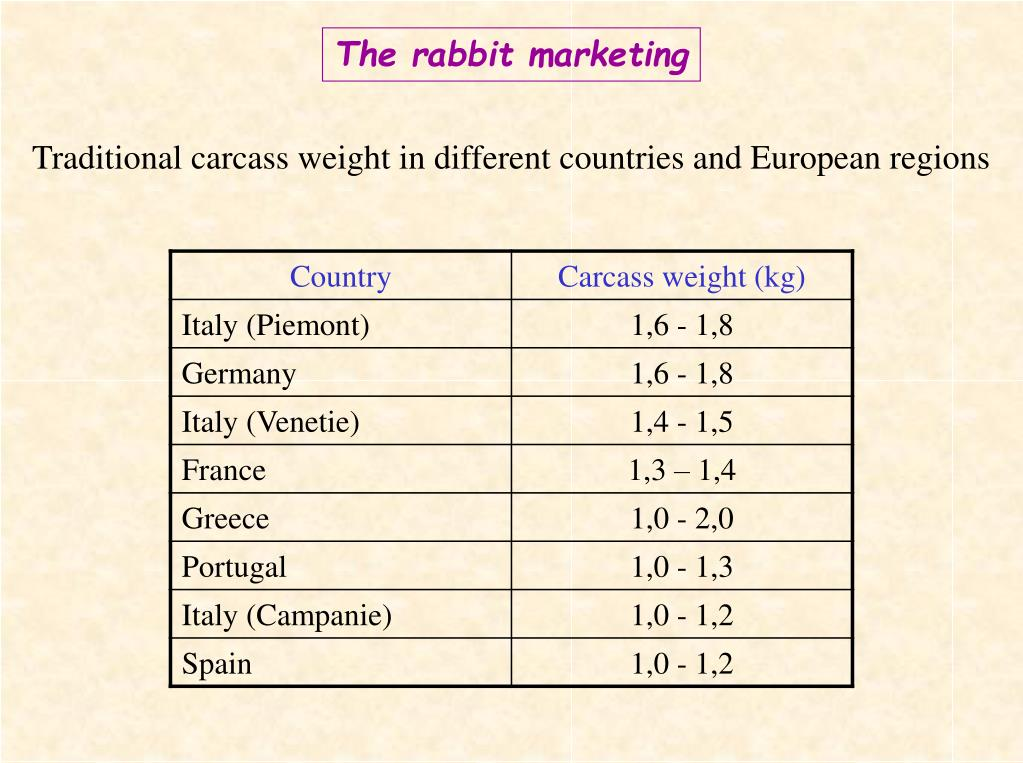 The rabbit marketing