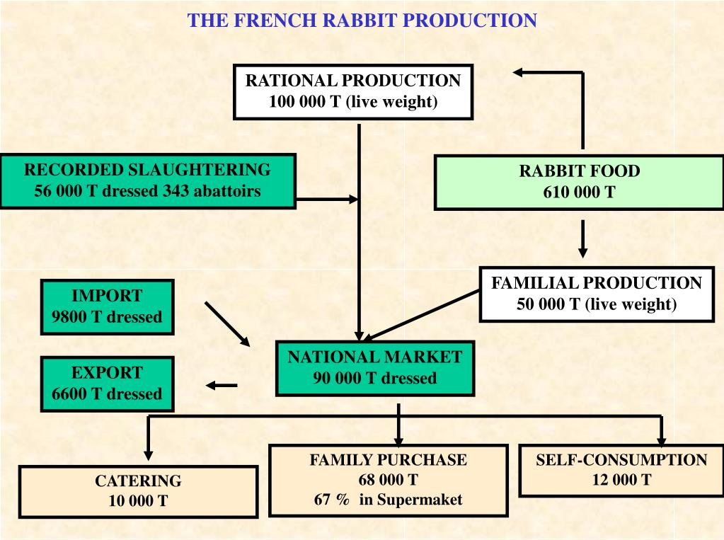 THE FRENCH RABBIT PRODUCTION