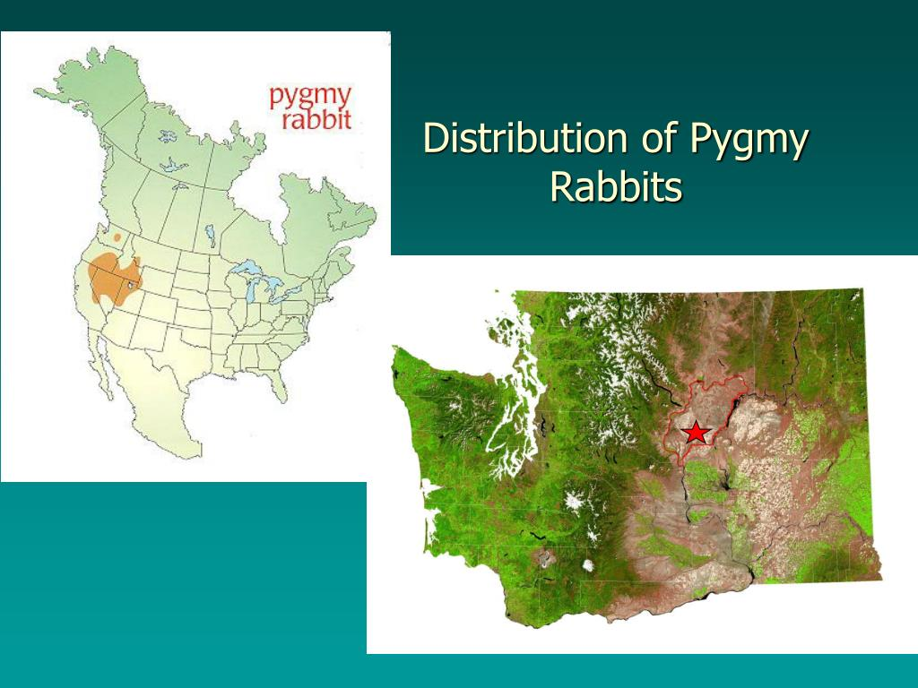 Distribution of Pygmy Rabbits