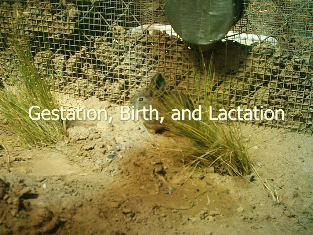 Gestation, Birth, and Lactation