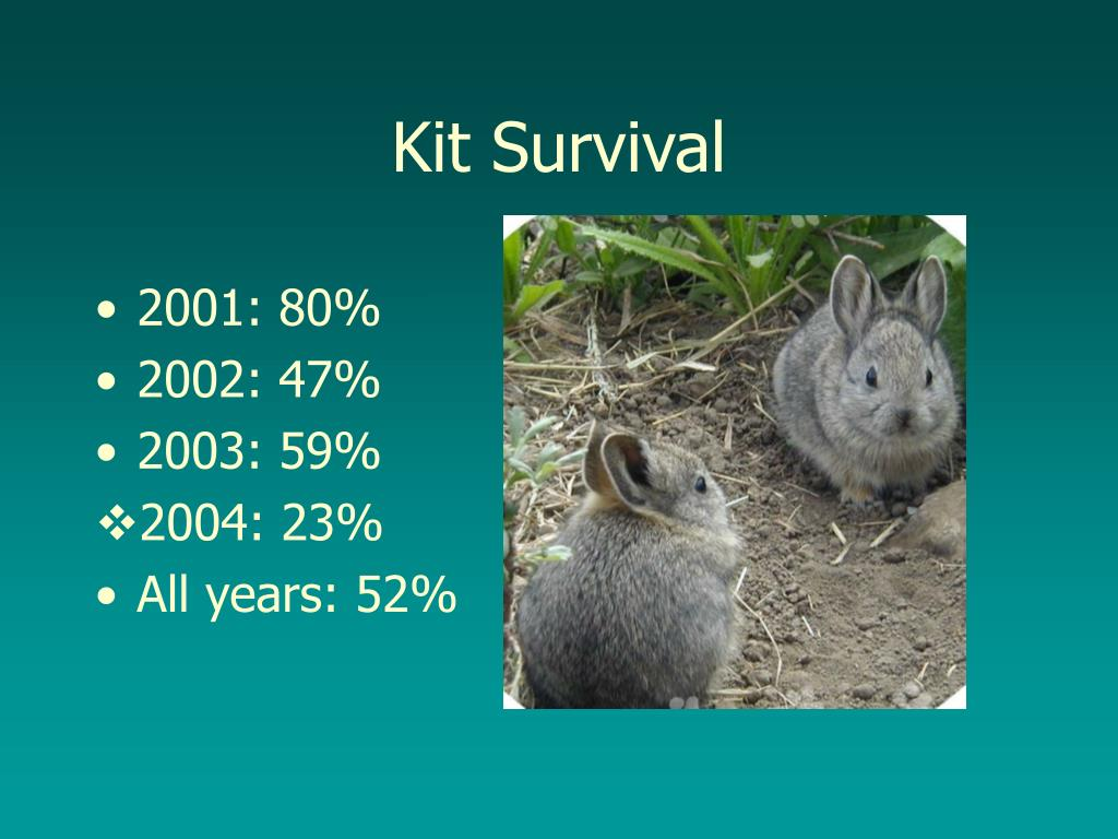 Kit Survival