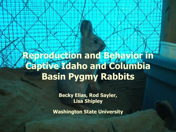 Reproduction and behavior in captive idaho and columbia basin pygmy rabbits l.jpg