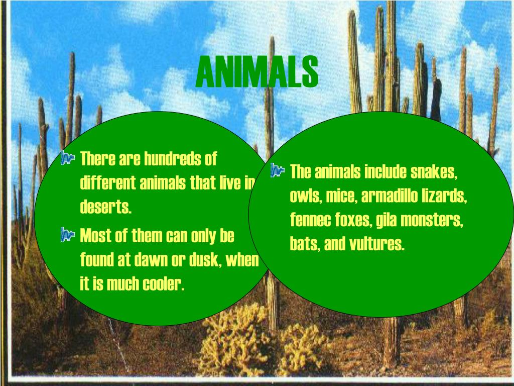 There are hundreds of different animals that live in deserts.