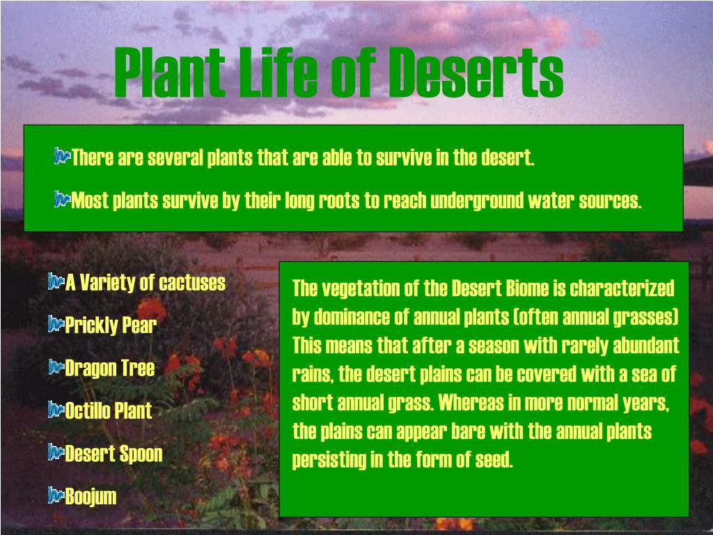 Plant Life of Deserts
