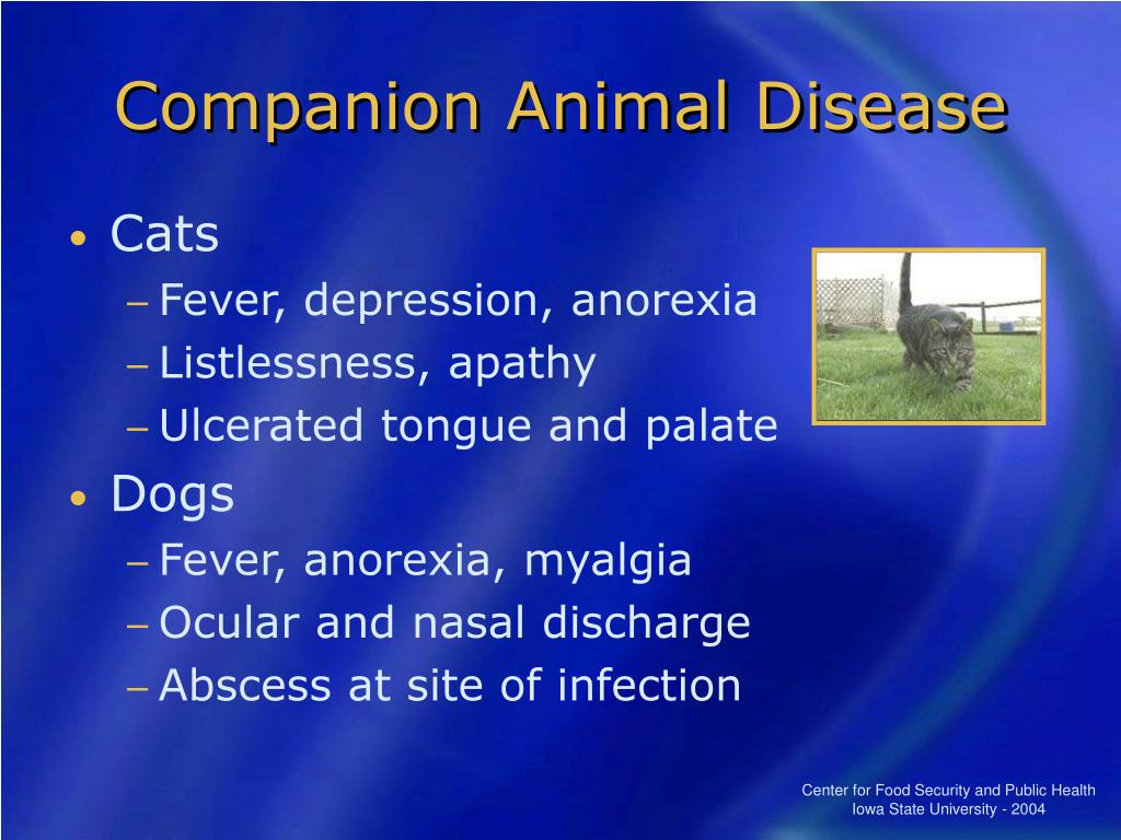 Companion Animal Disease