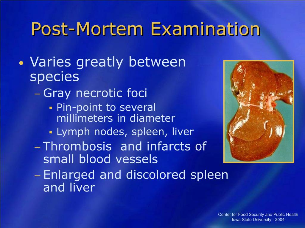 Post-Mortem Examination