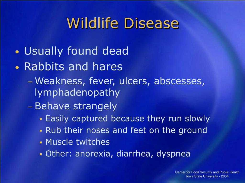 Wildlife Disease