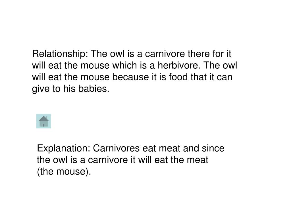 Relationship: The owl is a carnivore there for it will eat the mouse which is a herbivore. The owl will eat the mouse because it is food that it can give to his babies.