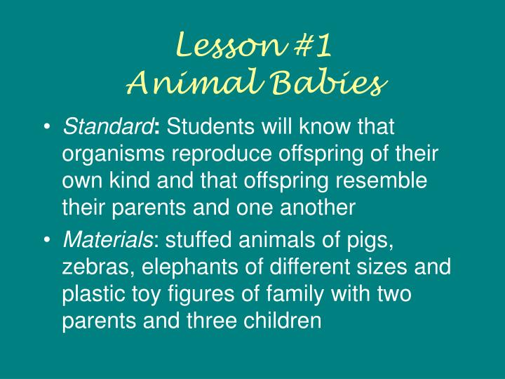 Lesson 1 animal babies