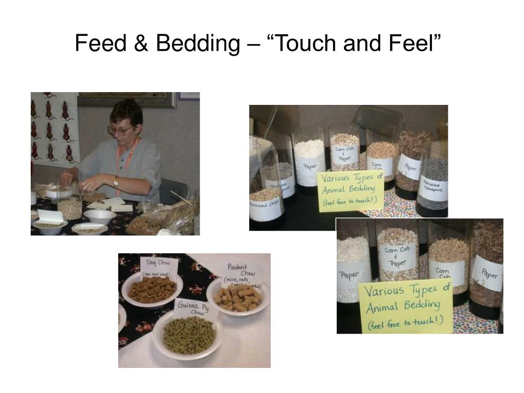 """Feed & Bedding – """"Touch and Feel"""""""