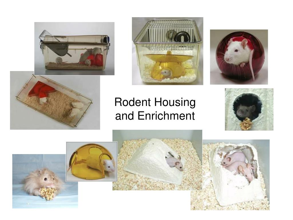 Rodent Housing