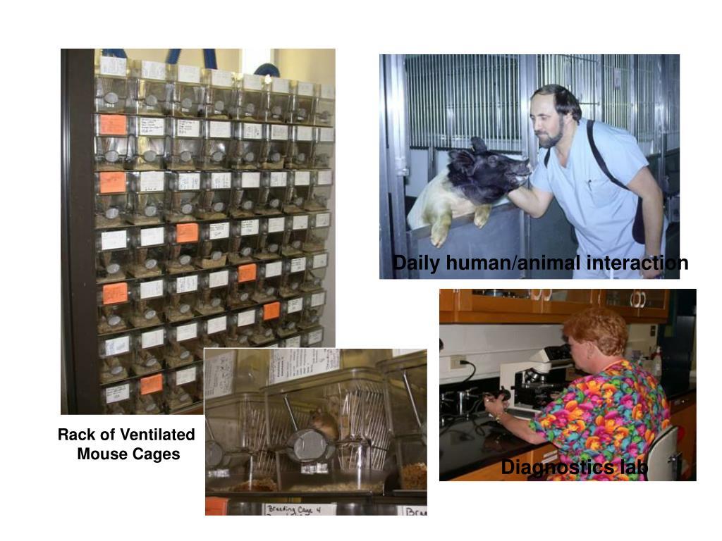 Daily human/animal interaction