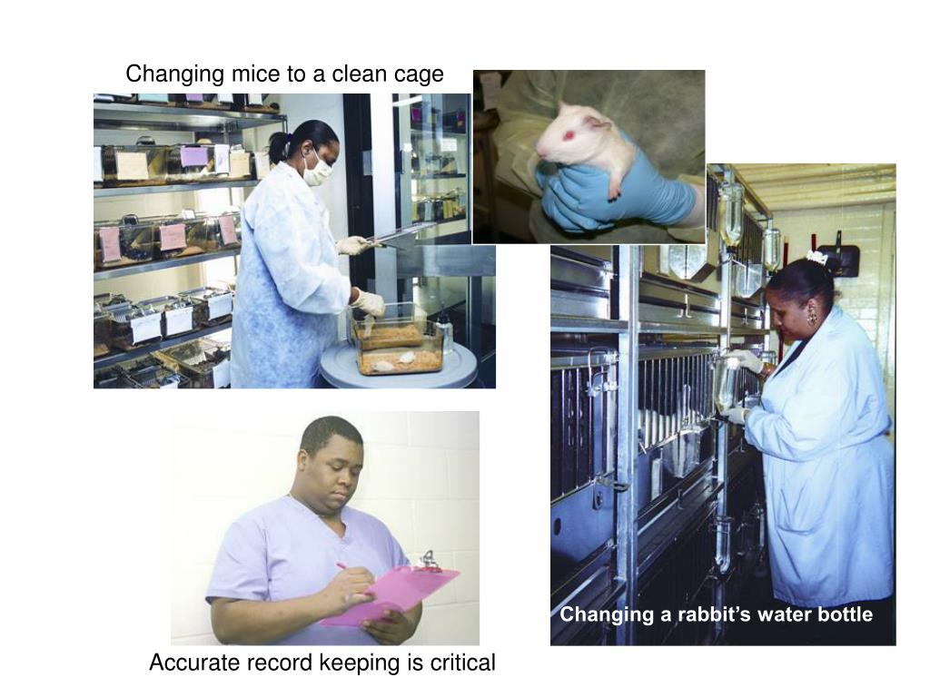 Changing mice to a clean cage
