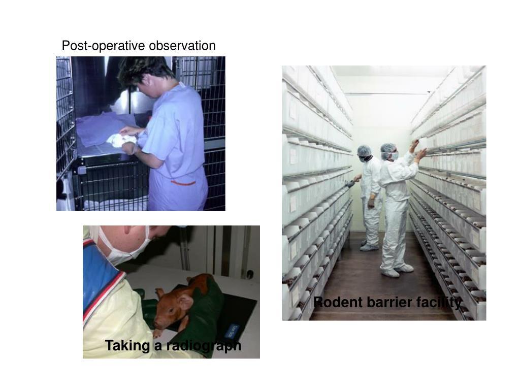 Post-operative observation