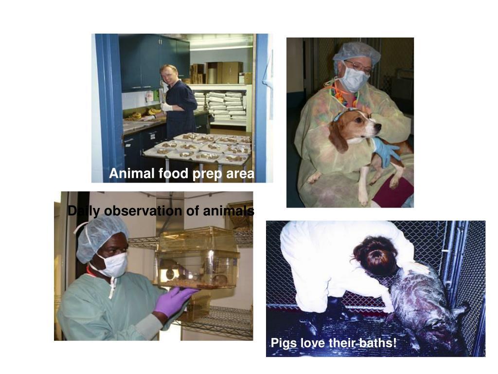 Animal food prep area