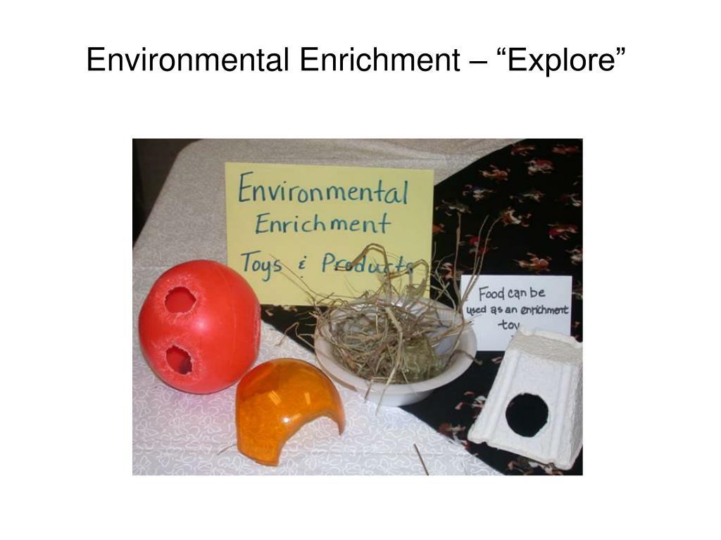 "Environmental Enrichment – ""Explore"""