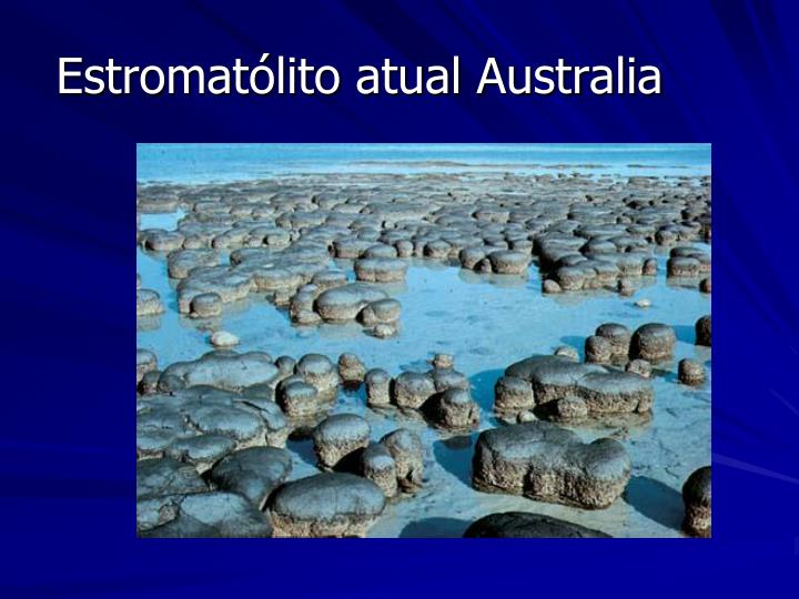 Estromatólito atual Australia