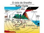 o ciclo do enxofre