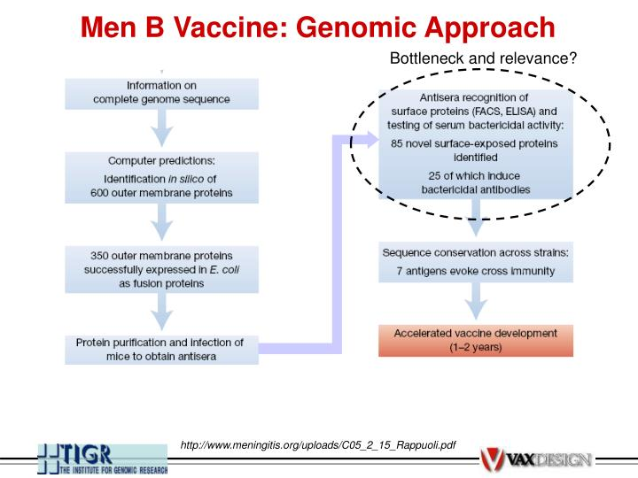 Men B Vaccine: Genomic Approach