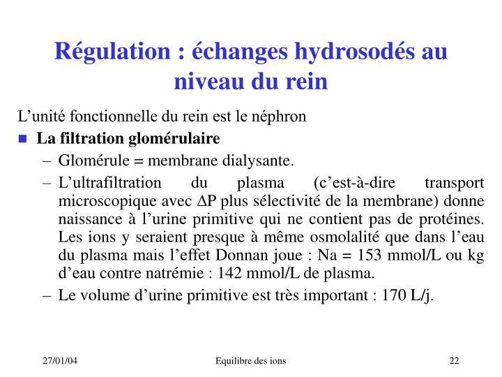 Régulation: échanges hydrosodés au niveau du rein
