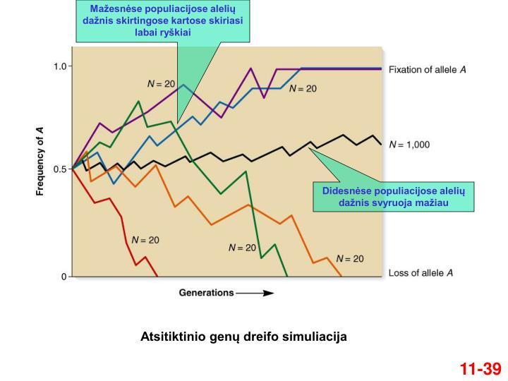 Mažesnėse populiacijose alelių dažnis skirtingose kartose skiriasi labai ryškiai