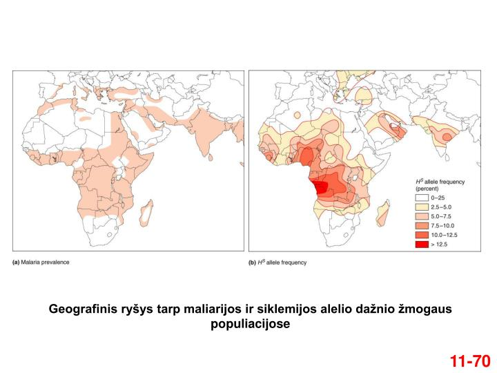 Geografinis ryšys tarp maliarijos ir siklemijos alelio dažnio žmogaus populiacijose