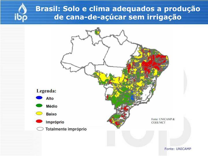 Brasil: Solo e clima adequados a produção de cana-de-açúcar sem irrigação