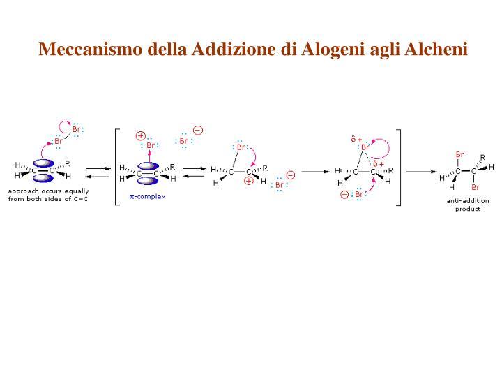 Meccanismo della Addizione di Alogeni agli Alcheni