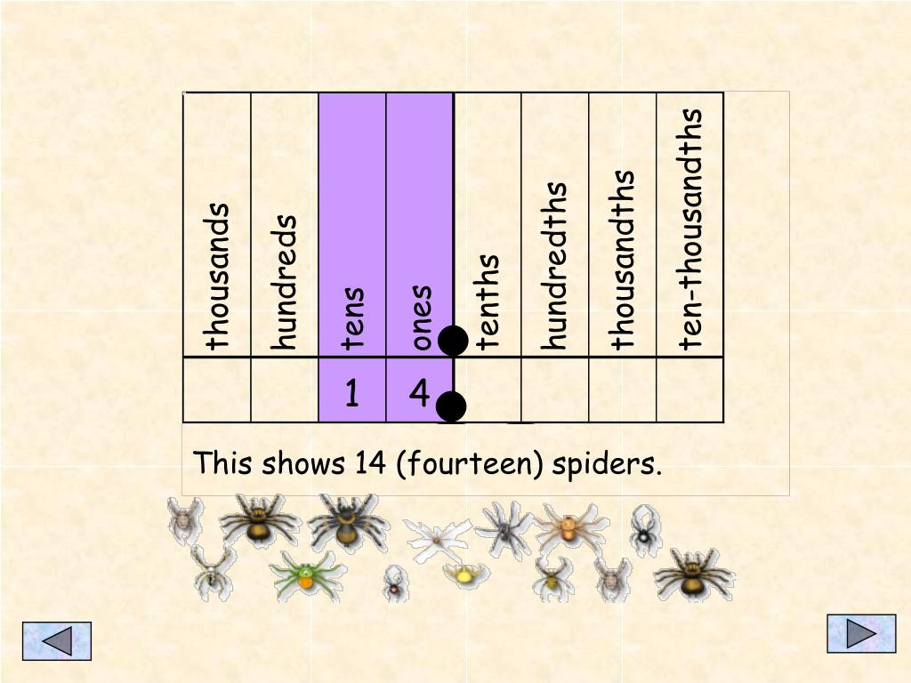 This shows 14 (fourteen) spiders.