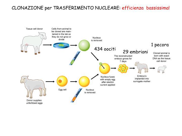 CLONAZIONE per TRASFERIMENTO NUCLEARE: