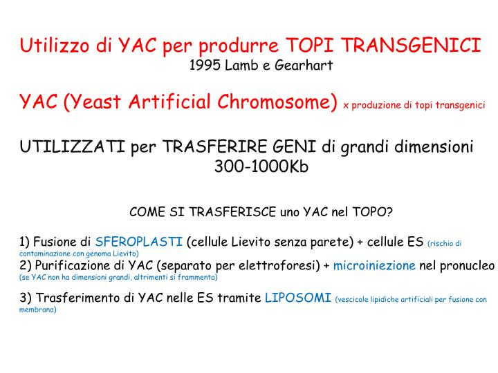 Utilizzo di YAC per produrre TOPI TRANSGENICI