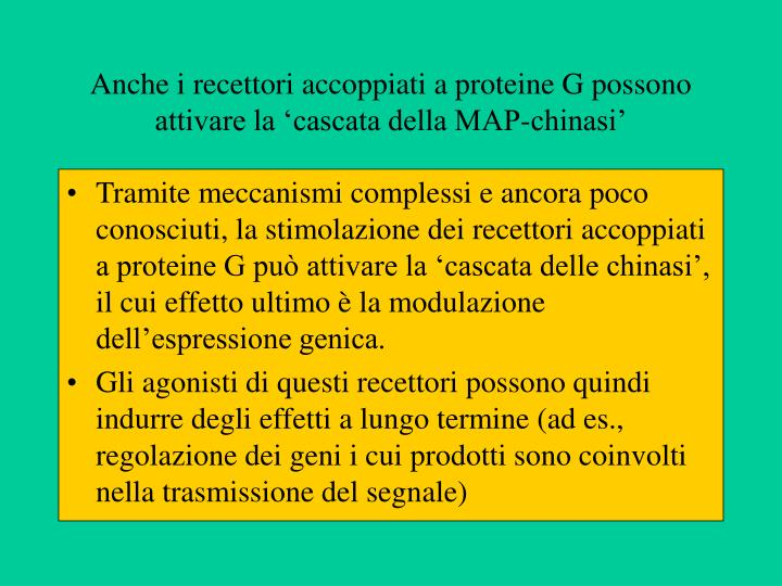 Anche i recettori accoppiati a proteine G possono attivare la 'cascata della MAP-chinasi'