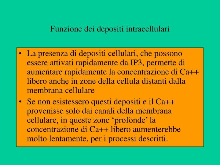Funzione dei depositi intracellulari