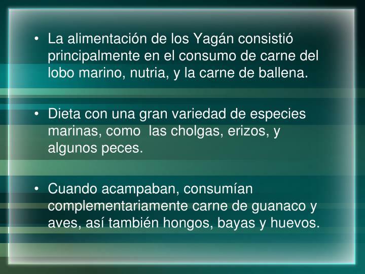 La alimentación de los Yagán consistió principalmente en el consumo de carne del lobo marino, nutria, y la carne de ballena.