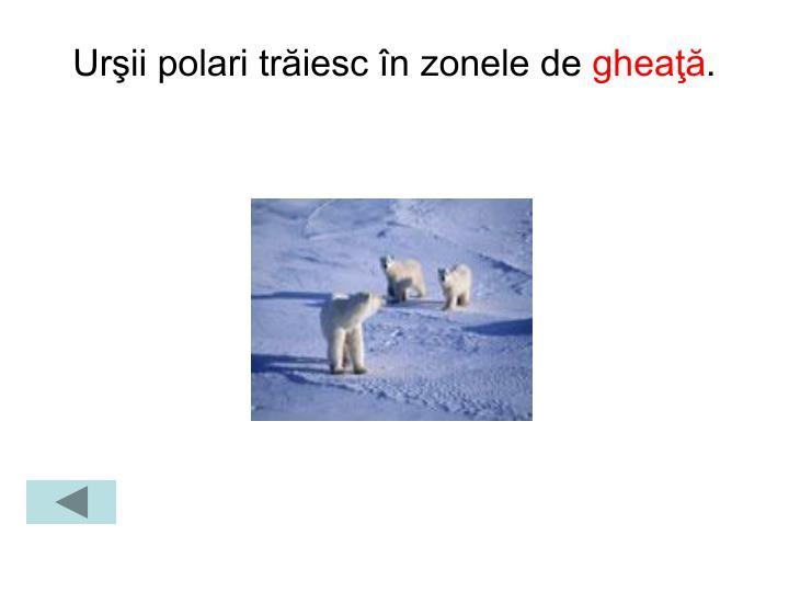 Urşii polari trăiesc în zonele de