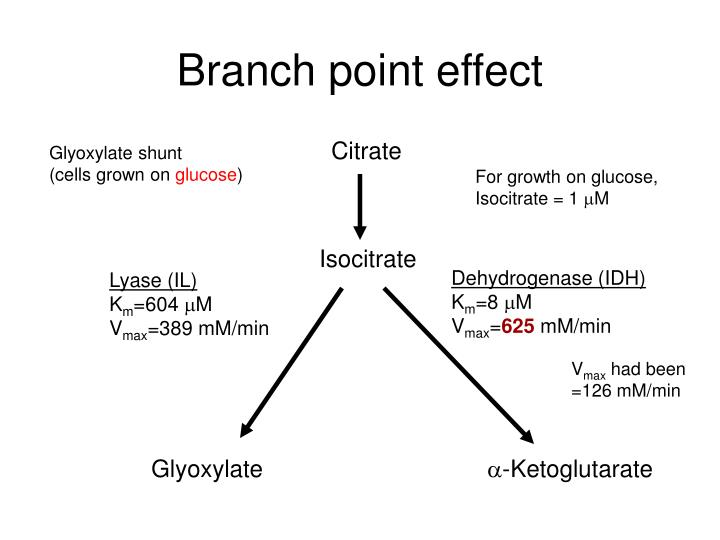 Branch point effect