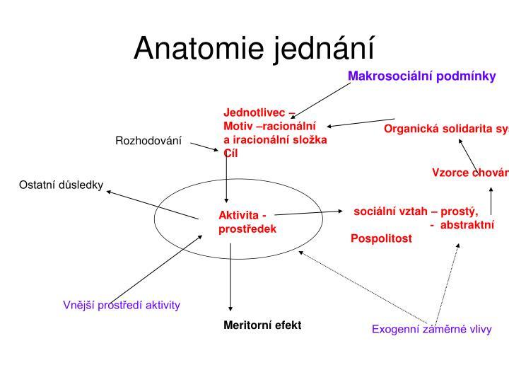 Anatomie jednn