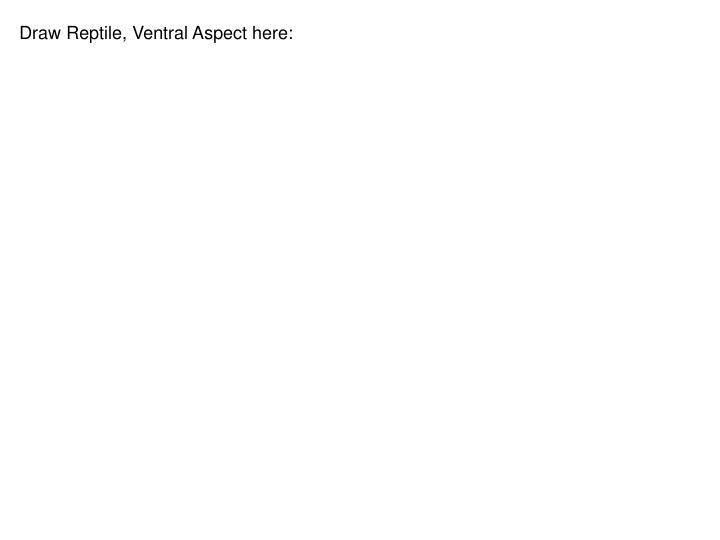 Draw Reptile, Ventral Aspect here: