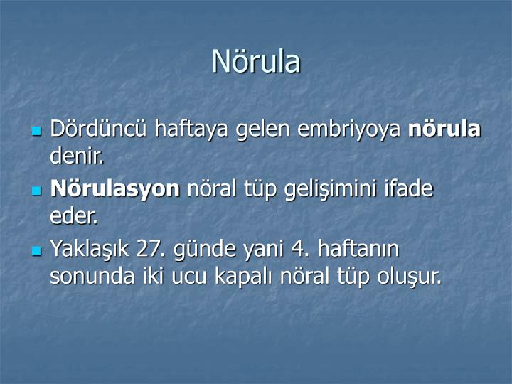 Nörula