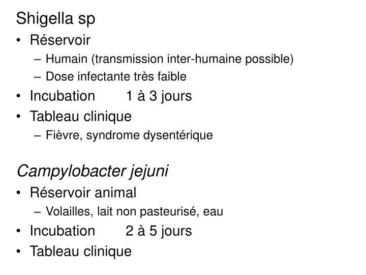 Shigella sp