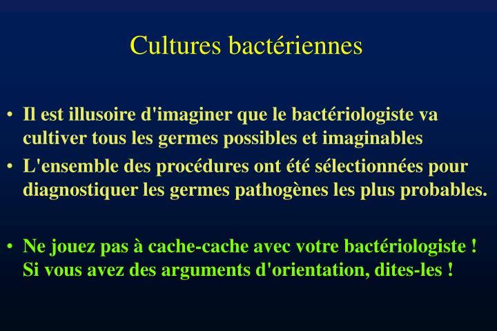 Cultures bactériennes