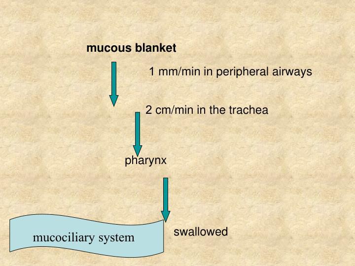 mucous blanket