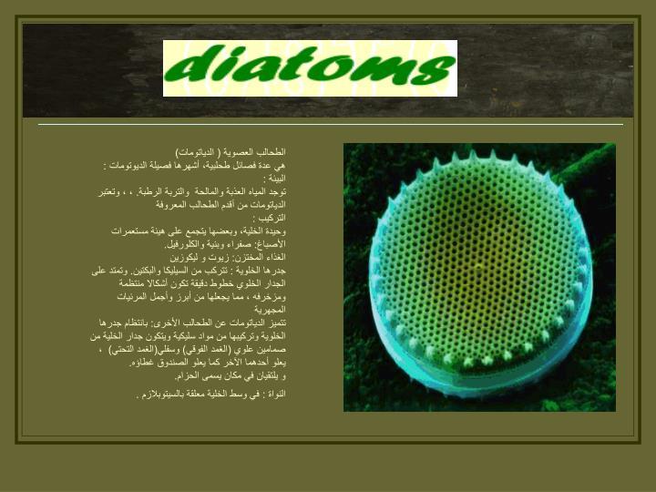 الطحالب العصوية ( الدياتومات)