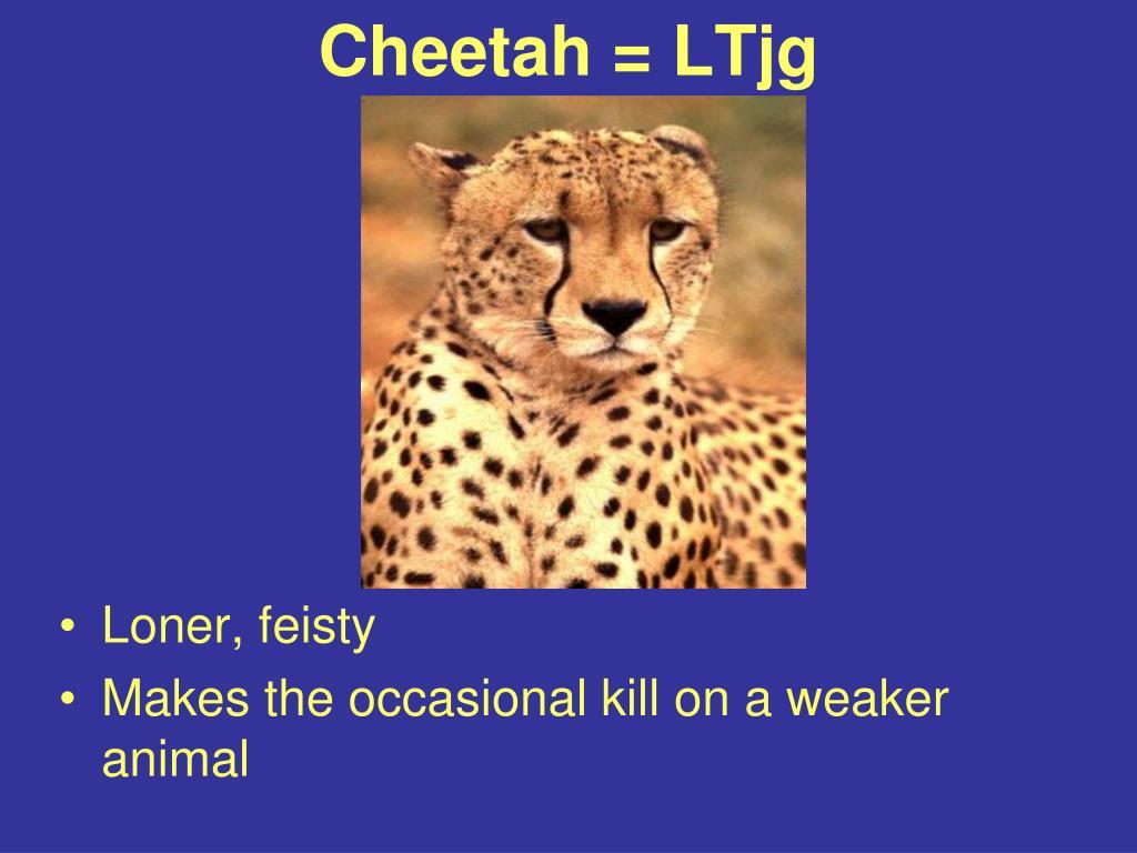 Cheetah = LTjg