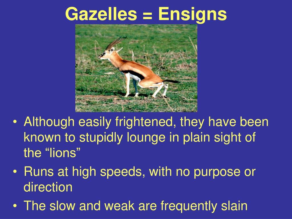 Gazelles = Ensigns