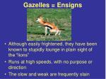 gazelles ensigns
