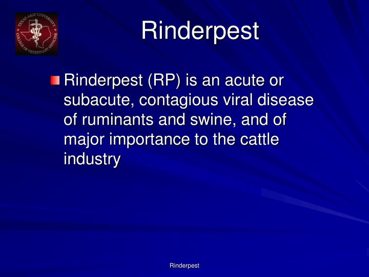 Rinderpest3
