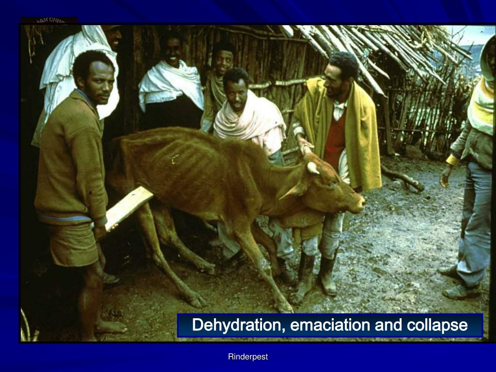 Dehydration, emaciation and collapse