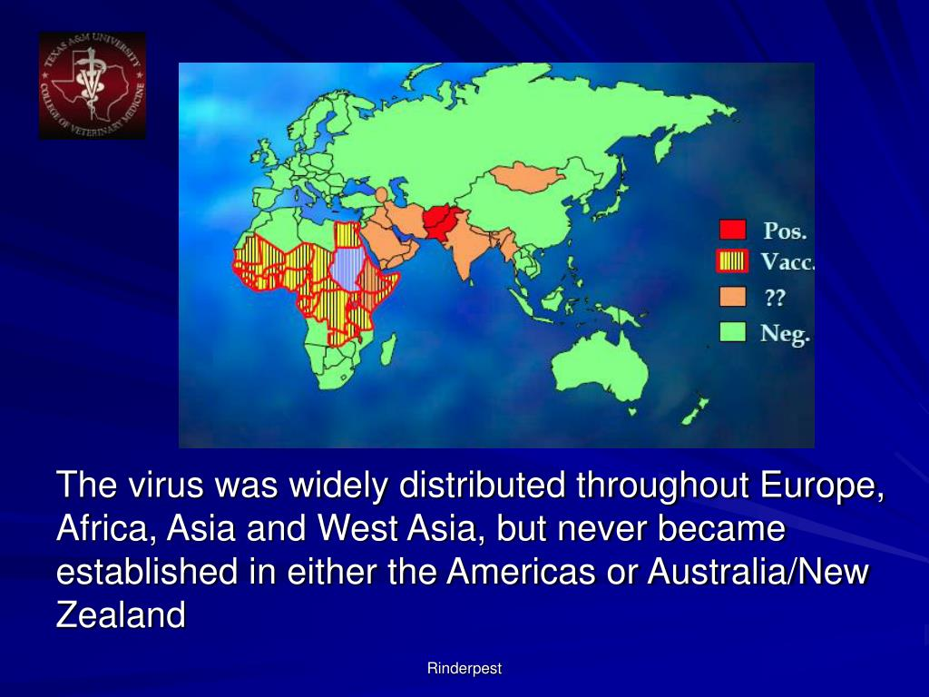 The virus was widely distributed throughout Europe, Africa, Asia and West Asia, but never became established in either the Americas or Australia/New Zealand