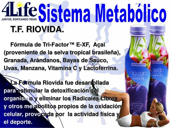 Sistema Metabólico